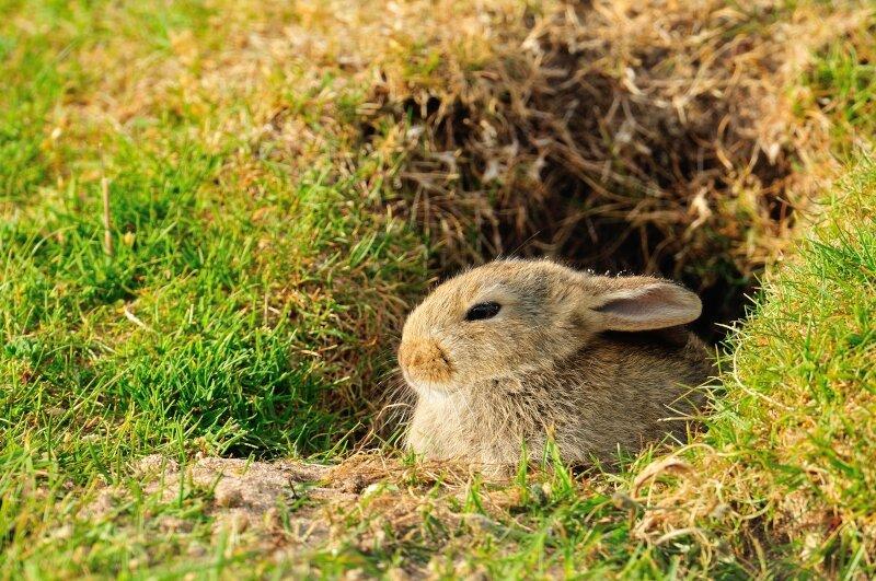 vilda-83203-konijn-aan-konijnenpijp-yves-adams-800-px-52732.jpg