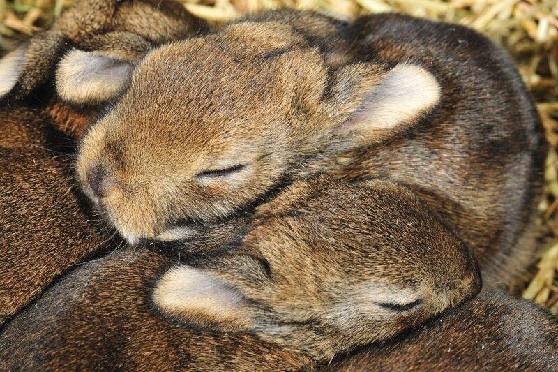 vilda-50982-jonge-wilde-konijntjes-yves-adams-800-px-52733.jpg