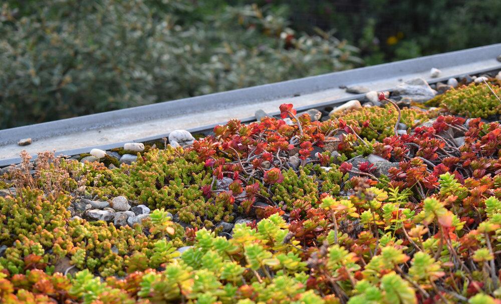 groen-dak-vetplanten.jpg