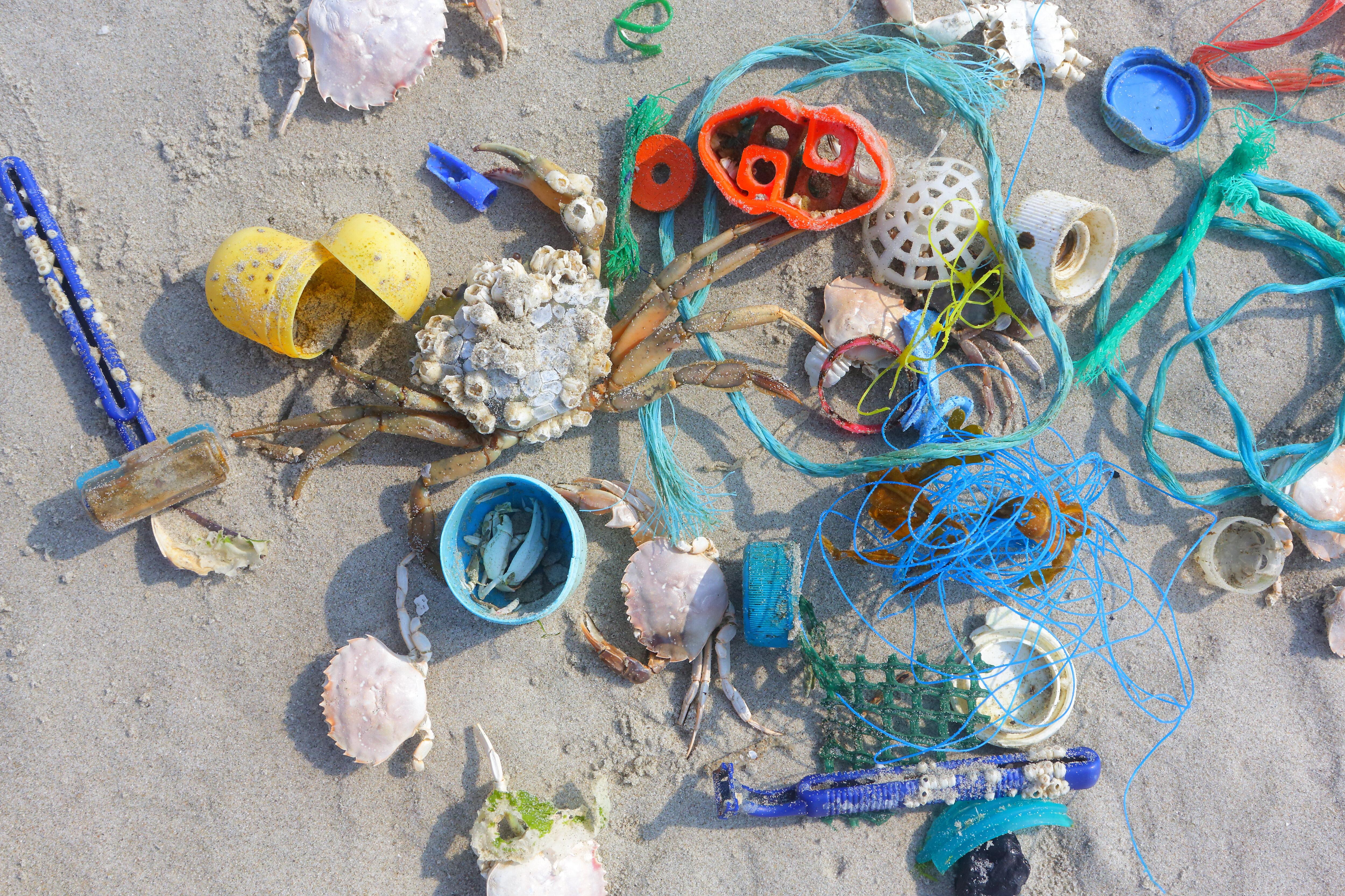 Plastique sur la plage (mer du Nord)