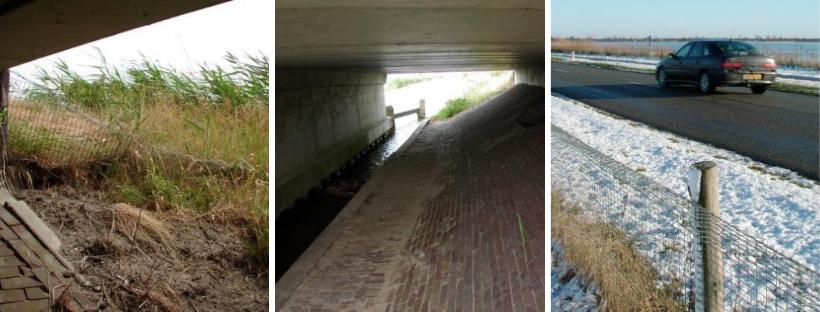 Clôture et trottoir pour loutres sous un pont