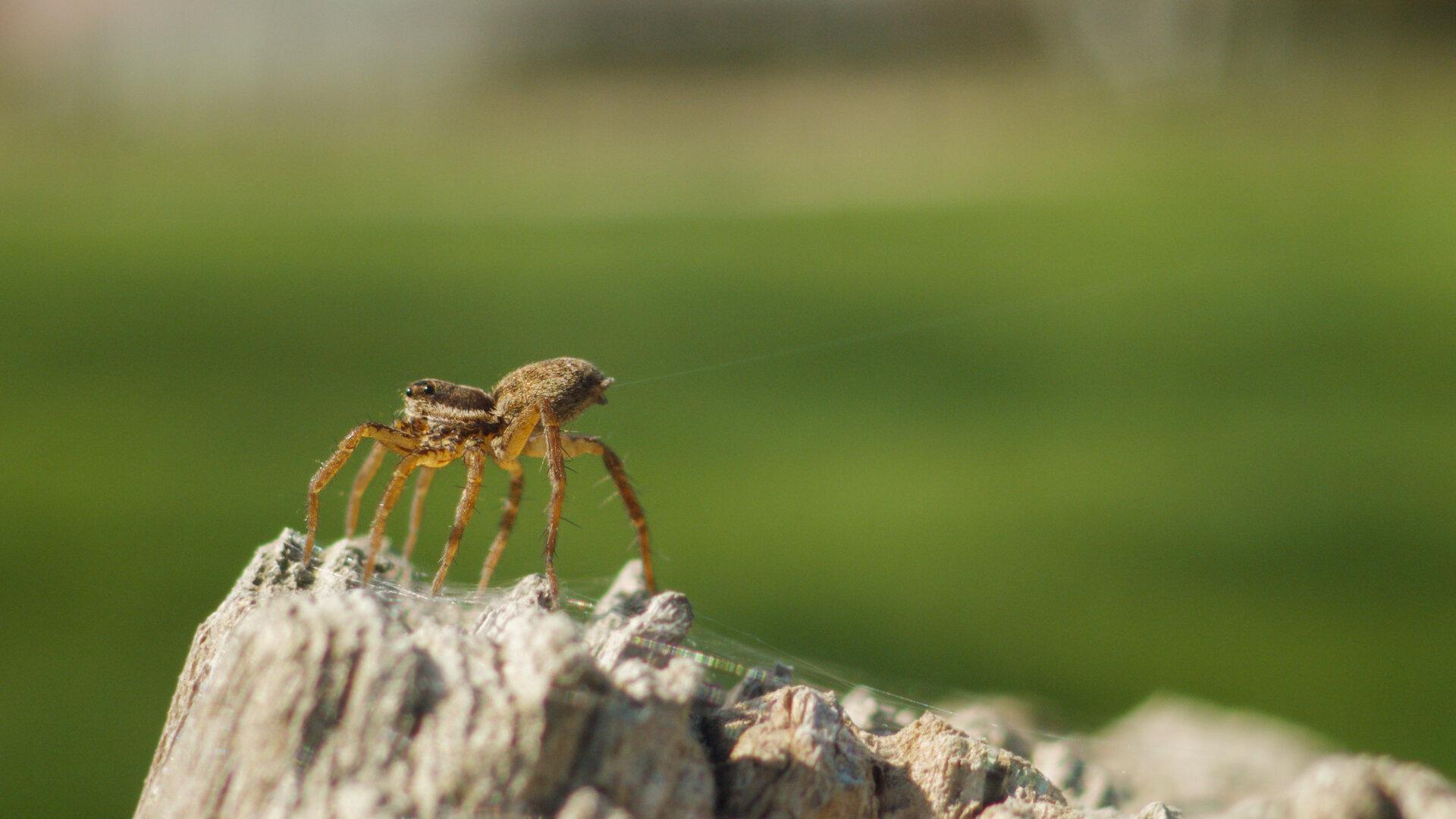 Araignée prête à voler