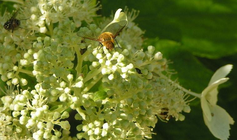 pollinisateur.png